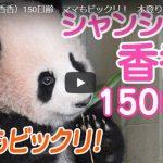 シャンシャン 150日齢の最新動画 自分で笹を食べる&丸太に登る&母親のシンシンとじゃれ合う動画が可愛すぎてヤバイ!