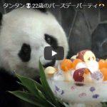 神戸のパンダのいる動物園『王子動物園』のタンタンが可愛いと話題に!タンタンの可愛い動画集&タンタンが直面している問題点