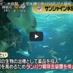 サンシャイン水族館 魚大量死 原因はウイルスではなく酸欠!?警備員が見た衝撃の光景とは!?