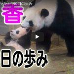 シャンシャン190日齢の動画と一般公開の様子がわかる動画公開!新パンダ舎建設決定は新たなパンダを連れてくるため!?上野動物園に新しいパンダがやってくるという噂の真相