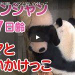 シャンシャン 飼育員さんに抱っこされる動画&207日齢の最新動画一挙紹介!